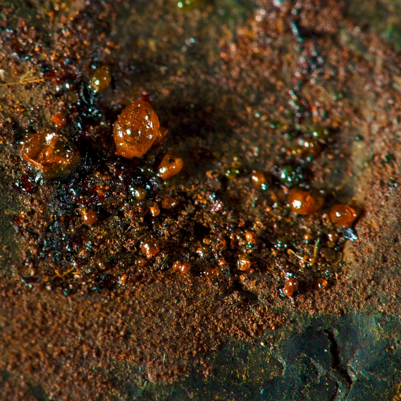 Udtræk af jernklorid dråber, på overfladen af ubehandlet jernmeteorit